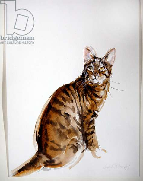 Tabby - Looking Up (w/c on paper)