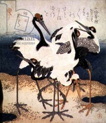 Five Cranes with White Feathers in Various Poses on a Spit of Sand, from Three Petals series, c.1816 (ink)