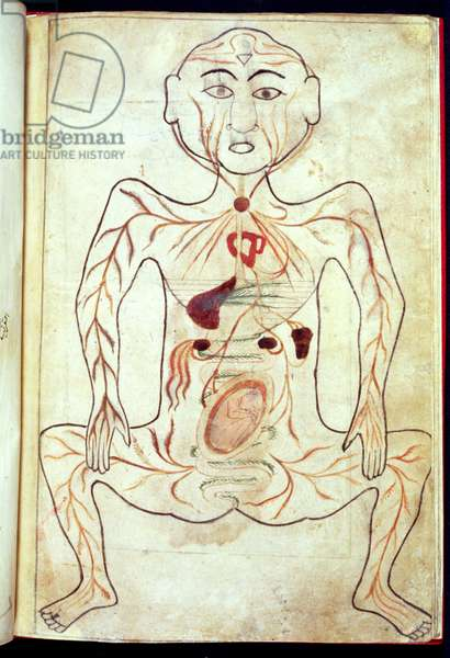 Organic Members and the Embryo in the Human Body, mid 15th century