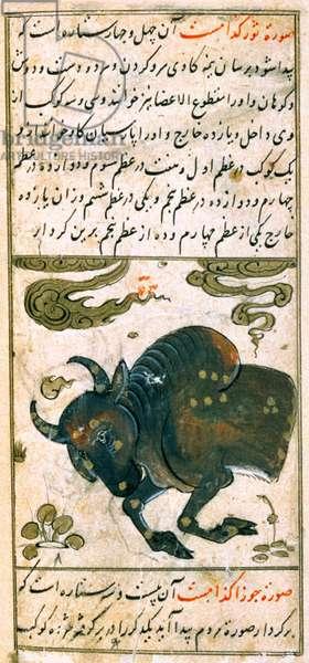 Constellations of the Zodiac: Taurus, the Bull, from Ta'lim dar ma'rifat i taqvuim, 1498 (903 Hijra) (vellum)