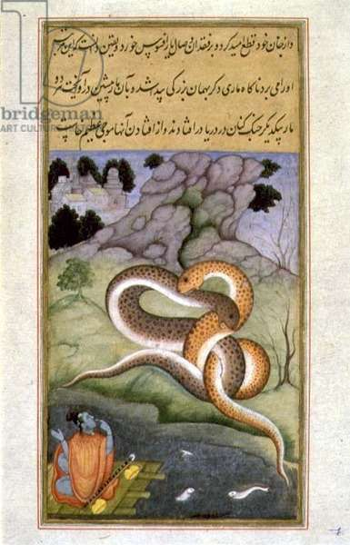 The Raj Kunwar Watches Two Snakes Entwined in Battle by a Deserted Shore (vellum)