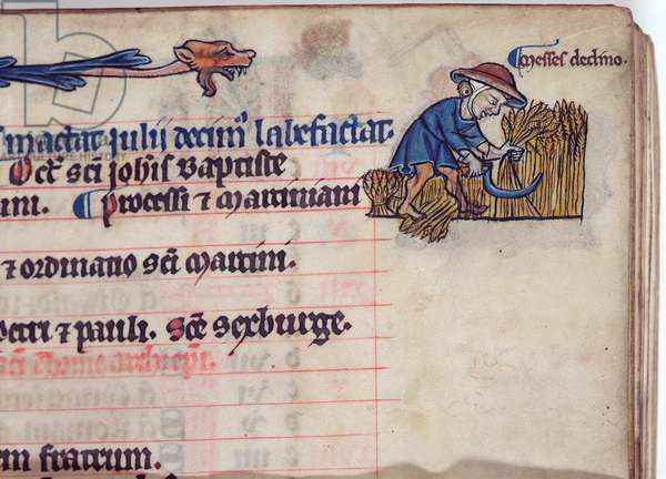 MS CCC 285 f.6 A figure reaping the fields, illustration for July, from a calendar of a psalter, English, c.1250-75 (parchment)