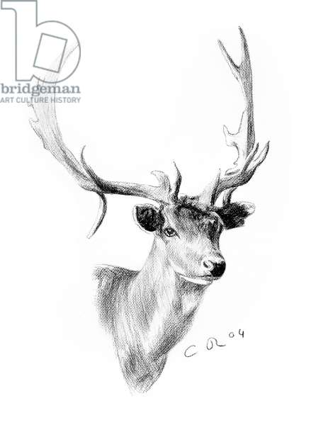 Denham Stag, 2004 (charcoal on paper)