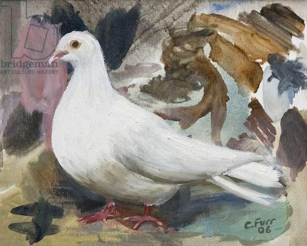 Dove, 2006 (oil on canvas)