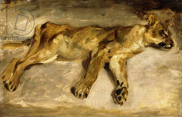 A Sleeping Lioness, c.1830 (oil on canvas)
