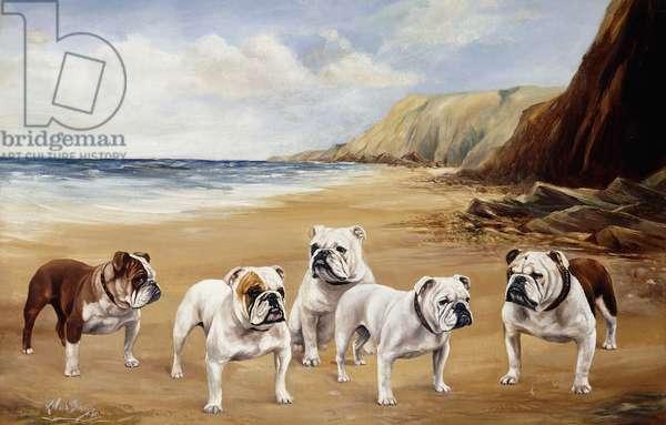 Bulldogs on a Beach,  (oil on canvas)