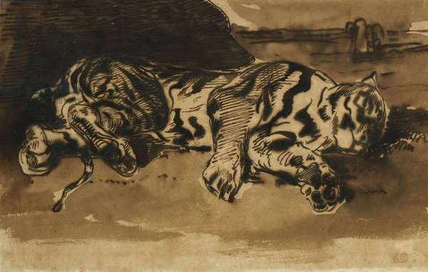 Tiger Lying Down; Tigre Couche, 1858 (pencil, pen and black ink and brown wash on paper)