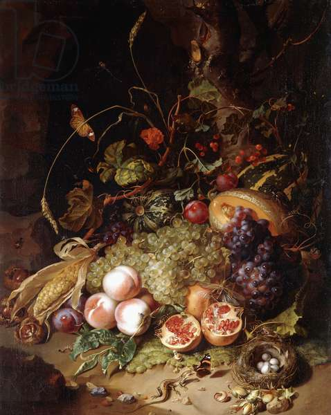 Still-life with Fruit and Insects,  (oil on canvas)