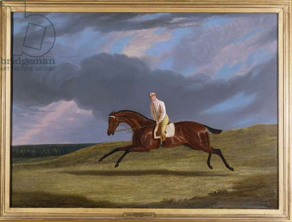 'Corduroy', a Bay Racehorse, with a Jockey Up, Galloping on a Racecourse (oil on canvas)