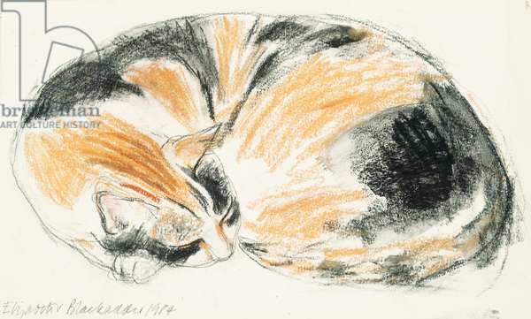 Sleeping Cat, 1984 (pencil, wash & pastel on paper)