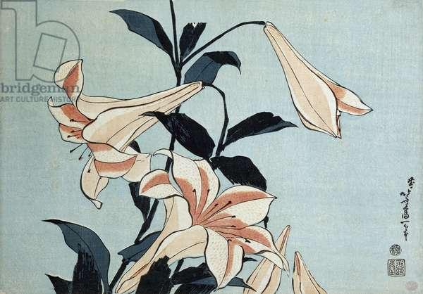 Trumpet lilies (colour woodblock print)