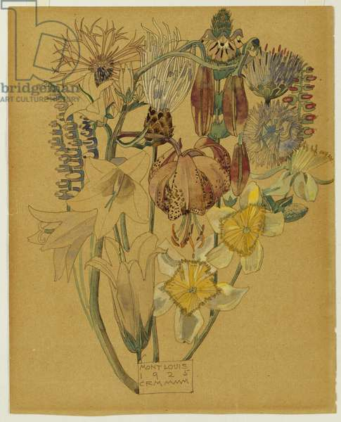 Mont Louis - Flower Study, 1925 (pencil & w/c)