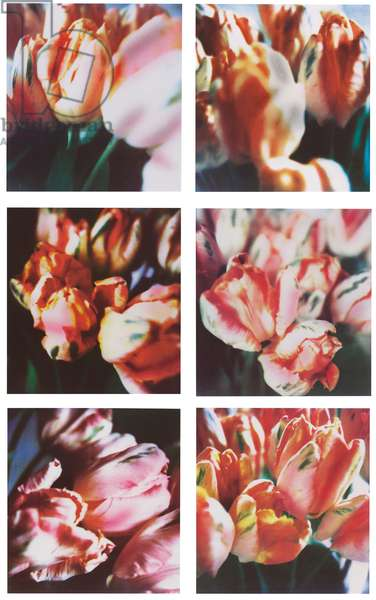 Tulips (III), nos 1-6, conceived 1985, executed 1993 (print on cotton paper)