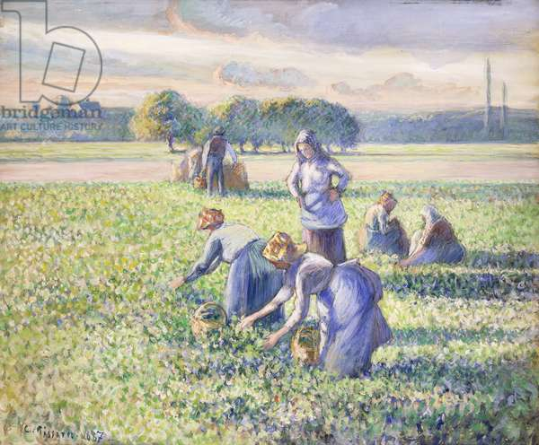 The Harvest of Peas, 1887 (gouache on paper)