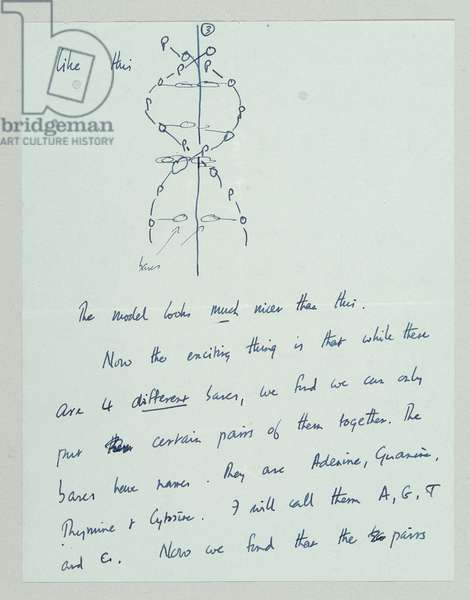 Autograph letter outlining the discovery of the structure and function of DNA, Cambridge, 19th March 1953 (pen & ink on paper) (see also 742024 and 808636-43)