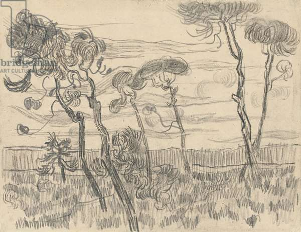 Six Pines Near the Enclosure Wall, 1899 (charcoal and pencil on paper)