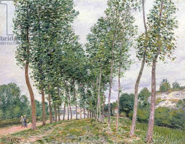 The Avenue of Poplars along the Banks of the Loing, 1892 (oil on canvas)
