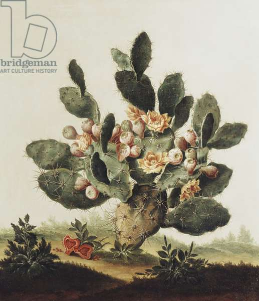 Still life of a cactus (oil on canvas)