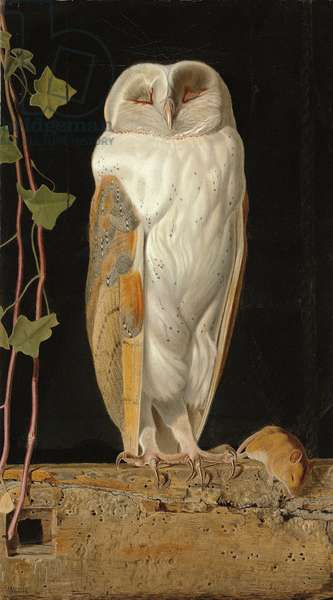 The White Owl: 'Alone and warming his five wits, the white owl in the belfry sits', 1856 (oil on board)