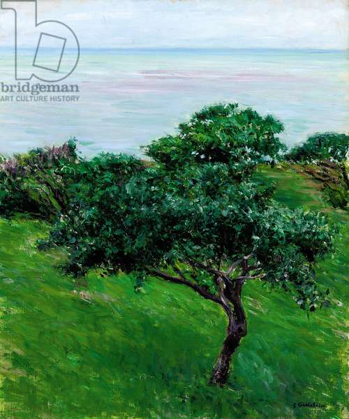 Apple Trees by the Sea, Trouville, 1880 (oil on canvas)