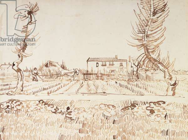Working the Fields at Arles; Laboureur dans les Champs a Arles, 1888 (reed pen and ink over pencil on paper)