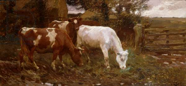 Cattle Grazing by a Gate, 1906 (oil on canvas)