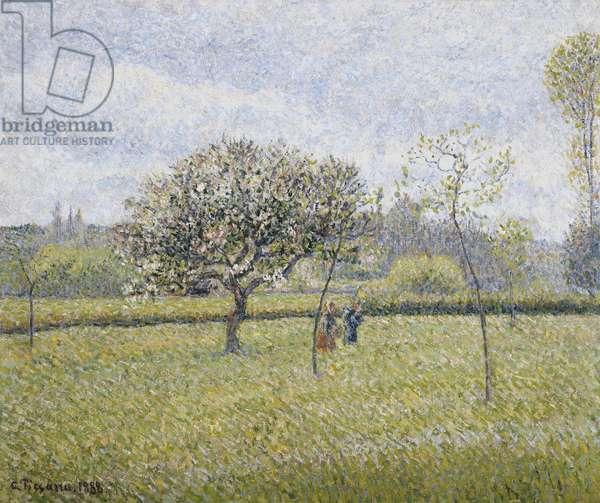 Apple Tree in Flower at Eragny; Pommier en Fleur a Eragny, 1888 (oil on canvas)