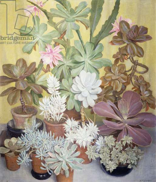 Succulents, (oil on canvas)