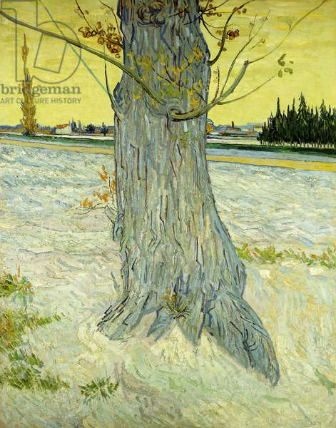 The Old Tree; Le Vieil If, 1888 (oil on canvas)