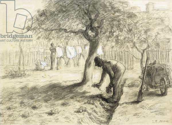 Gardening,  (black and white chalk on paper)