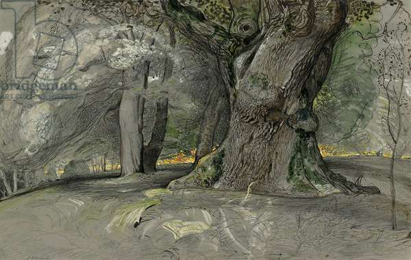 Oak tree and beech, Lullingstone Park, 1828 (pencil, pen and brown ink and watercolour, heightened with bodycolour, on grey paper)