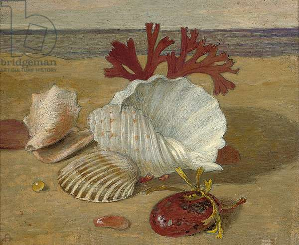 Stranded Shells (tempera on copper)