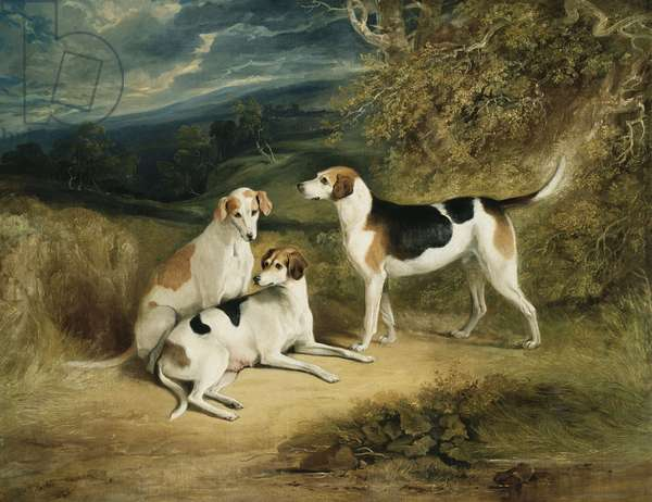 The Duke of Rutland's Hounds with Belvoir Castle in the Distance, 1828 (oil on canvas)