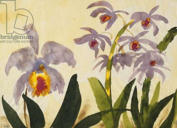 Irises; Irisse, (watercolour on paper)