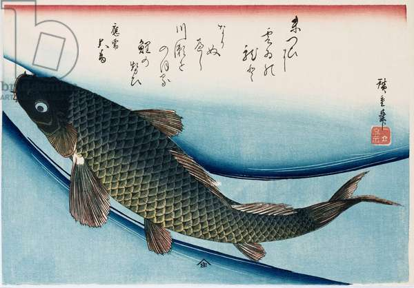 'Carp', from the series 'Collection of Fish' (woodblock print)