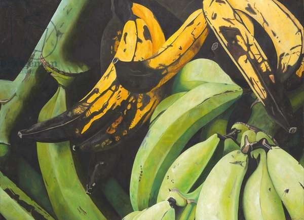 Plantains; Platanos machos, 2001 (oil on canvas)