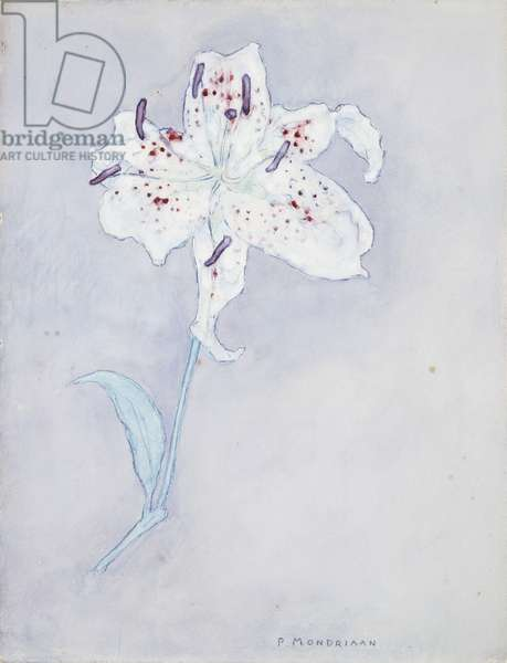 Lily, c.1920-25 (watercolour on paper)