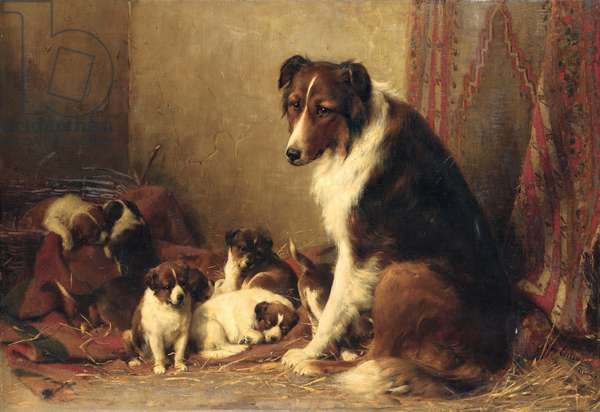 A Collie with her Puppies (oil on canvas)