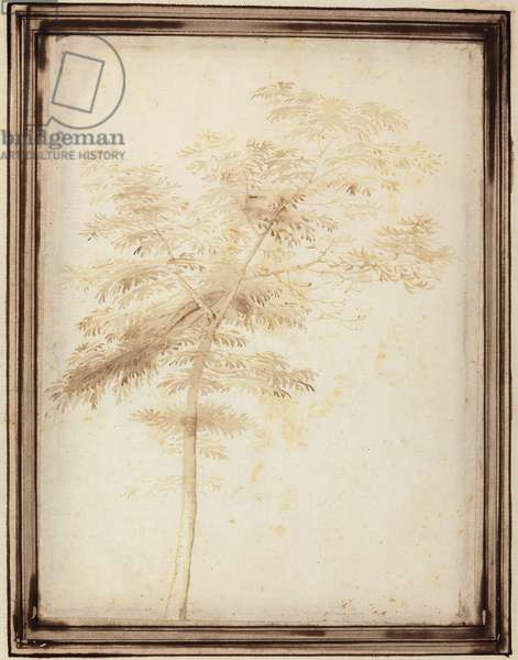 A Study of a Tree (brush & brown wash on paper)