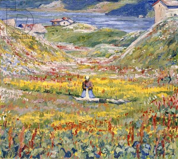 Flowering Meadows in Maloja; Bluhende wiesen bei Maloja, c.1912-1924 (oil on canvas)