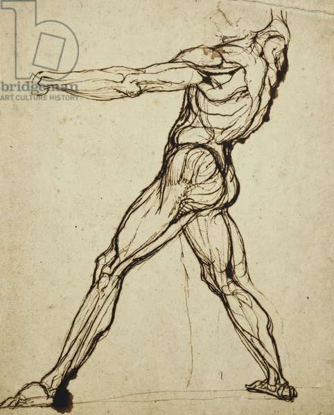 A Nude Throwing, (pen and brown ink)