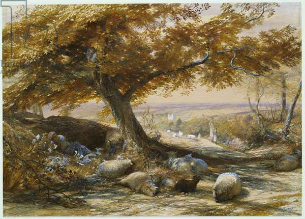 Sheep in the Shade, c.1851 (pencil & w/c heightened with white)