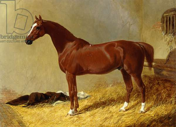 A Bay Racehorse in a Stall, 1843 (oil on canvas)