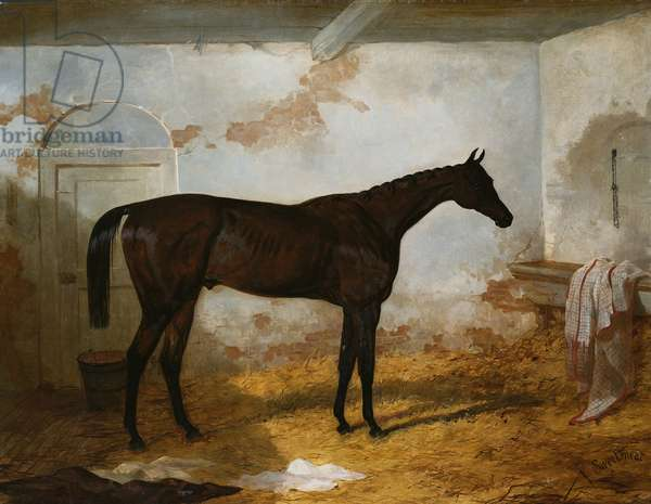 Mr A.W. Hill's Bay Colt 'Sweetmeat' in a Loose Box, 1845 (oil on canvas)