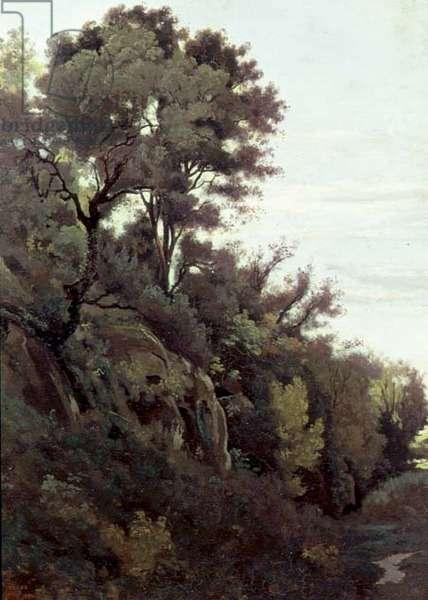 Marino - Trees and Rocks