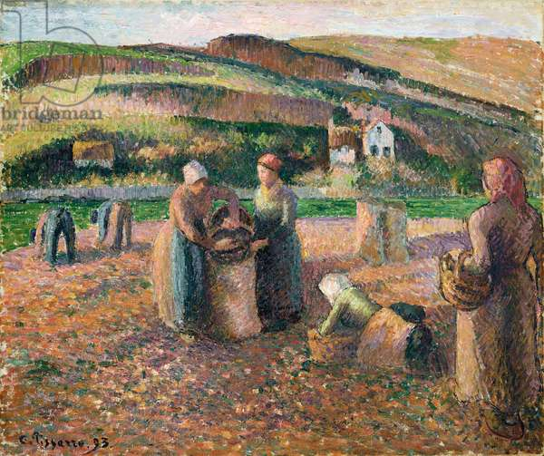 Picking Potatoes, 1893 (oil on canvas)