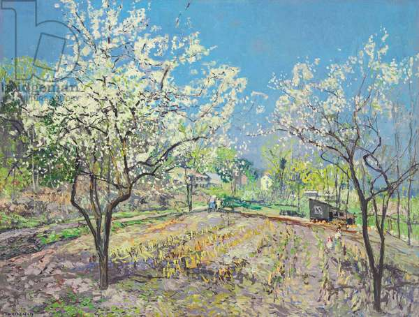 Plum Blossoms, c.1920 (oil on canvas)