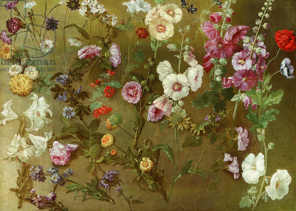 Composition of flower studies including carnations, pincushion flowers, bouncing bet, mallow; hollyhocks, African marigols, forget-me-nots (oil on canvas)