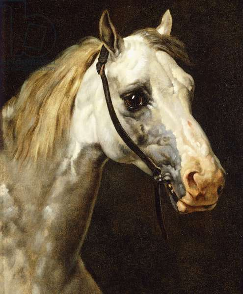 Head of a Piebald Horse, (oil on canvas)