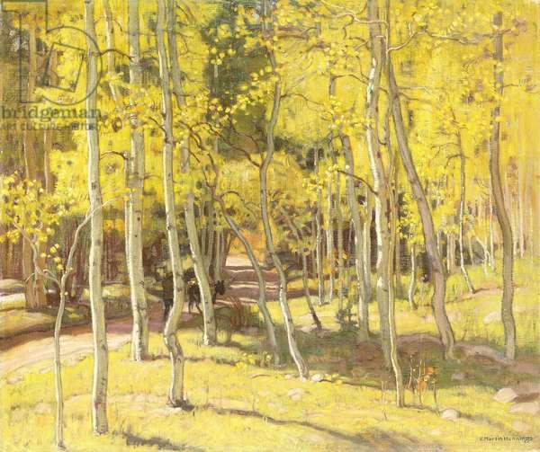 Aspen Grove,  (oil on canvas)